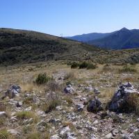 Au Plateau de Suech - Haut Verdon) (10)